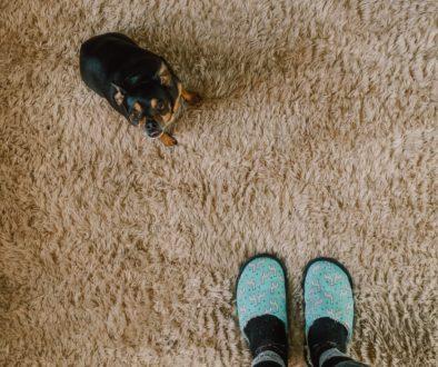 carpet cleaning, carpet cleaner, auburn, indiana